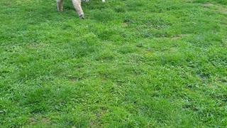 Lamb Thinks Its a Dog