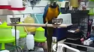 Beautiful whait parrot