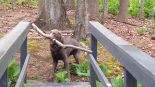 Dog Thinks Through A Problem l