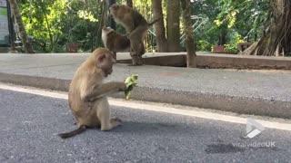 Monkey's daily routine