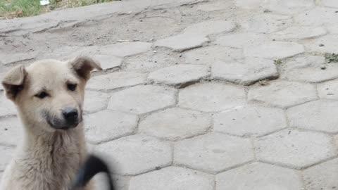 My Kids Feeding Poor Puppies During Lockdown   lockdown memories