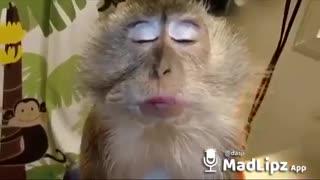 Madlipz Video In Hindi | Funny animals