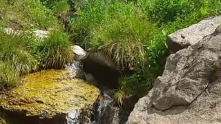 Flowing stream high in the Colorado Rocky Mountains (15s)