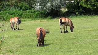 The horses are calmly grazing, isn't that great?