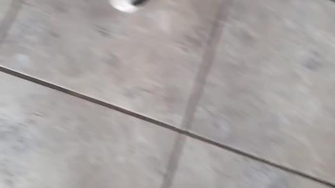 Boxer meet new baby kitten