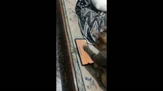 MY HUNTER CAT