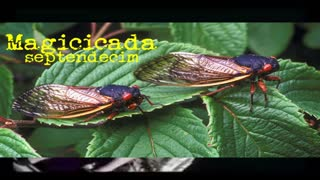 The Band Winger Wrote a song about Cicadas