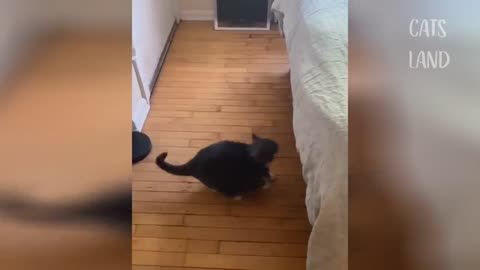 super Best Funny Cat Videos