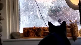 """Luna """"bird"""" watching."""