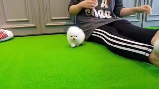 love little puppy