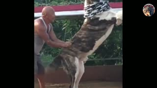 World Biggest Dog 2021