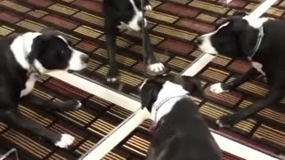 Funny dog with mirror 2021