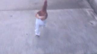 Chicken wearing pants
