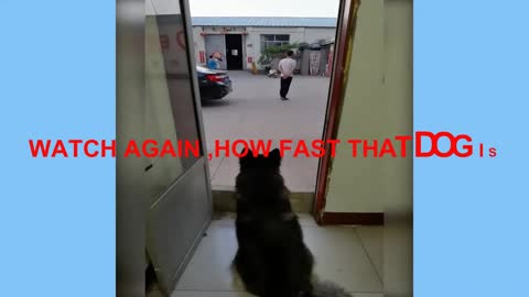 THE DOG OWNER TRIED TO TRICK HIS DOG BUT DOG IS SMARTER THAN MAN