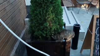 Ridiculous kitten