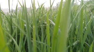 Beautifull green