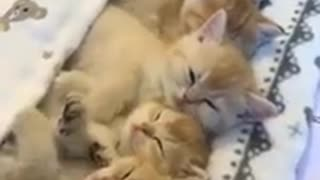 Cute Cats funny video compilation