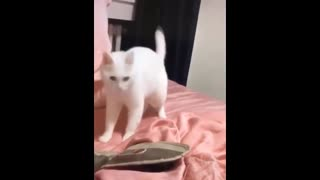 Cat moves to the beat!