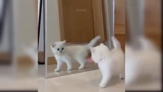 Cat gets scared, and what to catch himself