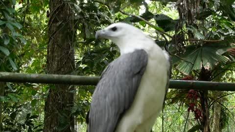 beautiful birds singing (5)