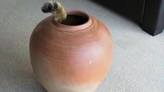 Fat Cat in pot attempt