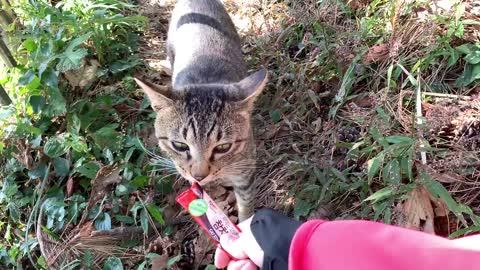 Street cat eating snacks