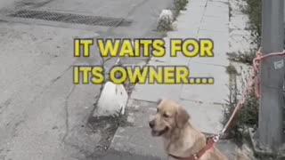 Heart-breaking video shows man abandoning dog