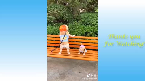 Really Funny animals and pets