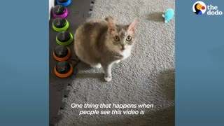 This Cat's Favorite Word Is Exactly What You'd Expect