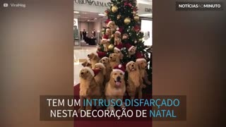 Árvore de Natal decorada com cães esconde um segredo