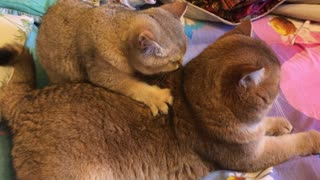 Kitty Back Massage