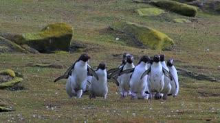 Penguin Fail
