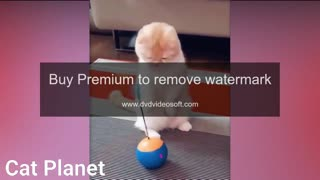 Cutest cats video compilation 2021