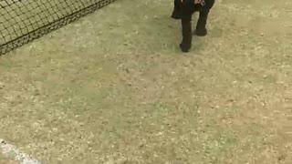 Dog Accidentally Backflips Through Tennis Net