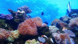marine life of fishes 🔥 4K 🔥