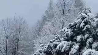 Snowy weather, Heidelberg