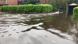 Kangaroos Spotted Struggling Through Flood Waters