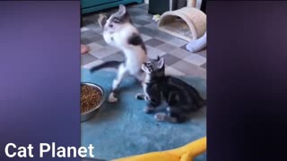 Best funny and cute cats