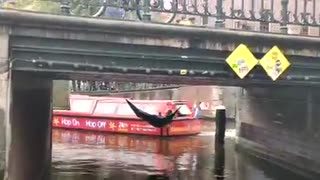 Protesters dive into Amsterdam canal during protest