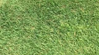 Man golf ball swing hits prank smoke