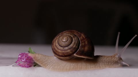 Snail/Relaxing music