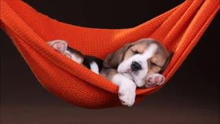 music to sleep your dog