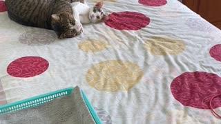 Cat's Playing Behind Doors Get Caught
