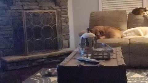 My animals sleeping
