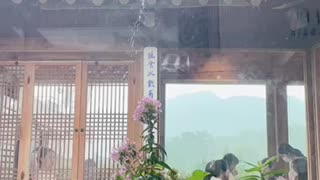 Tiled house rainy video