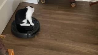 Cat Rides Robot Vacuum Cleaner