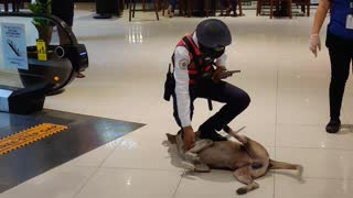 Patient Security Guard Escorts Stray Dog From Mall