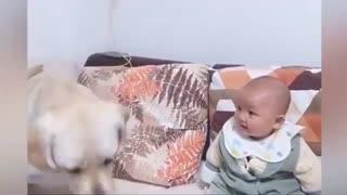 Funniest video/