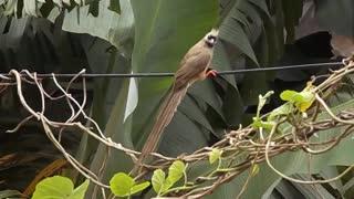 beautiful birds singing (8)
