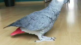 Parrot dance slomotion